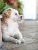 Dog. Small dog picture on the background of nature Stock Images