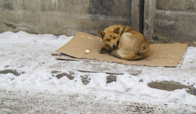 Dog. Stray dog on winter road Royalty Free Stock Images