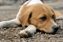 Dog. Lying on stone ground Lazily Stock Image