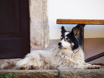 The dog Royalty Free Stock Photos
