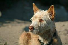 Dog. Looking at Stock Photo