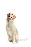 Dog Stock Photography