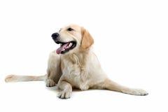 Free Dog Royalty Free Stock Image - 2865966