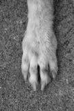 Dog Стоковое фото RF
