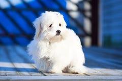 Free Dog Royalty Free Stock Photography - 38456817