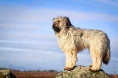 Free Dog Royalty Free Stock Image - 39582806