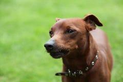 Dog2 Royalty-vrije Stock Afbeeldingen