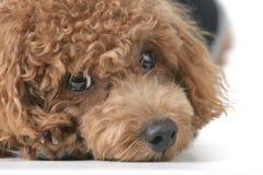 Free Dog Stock Image - 4420201