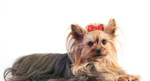 Free Dog Stock Photos - 4656583