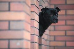 Dog. A black dog in garden stock image