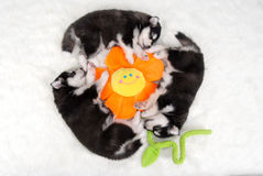 Sleeping Puppies Stock Photo