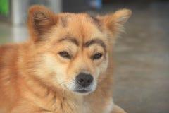 Портрет dog-1 Стоковые Изображения RF