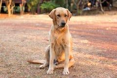 Free DOG Stock Photography - 49164042