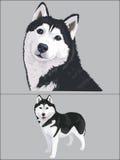 Dog. Illustration of two dog husky