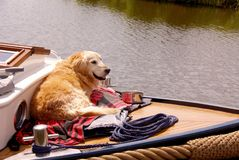Dog. A dog enjoying a tour with a motor boat Stock Photo