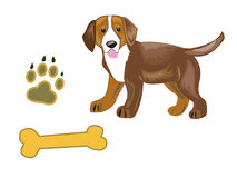 Dog. Little biggle puppy its trace and a bone Royalty Free Stock Photo