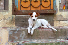 Dog2 Photo libre de droits