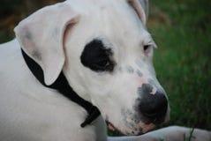 Free Dog  Stock Images - 6212904