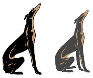 Dog. Greyhound, quickest hunter -- this is a vector drawing of kindly and sweet tempered dogs Royalty Free Stock Photo