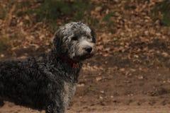 Free Dog Royalty Free Stock Photography - 64107587