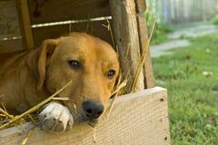 Free Dog Royalty Free Stock Image - 6467576