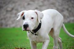 Free Dog Stock Photos - 6471753