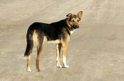 Dog. At the early morning encounter on the street a stray dog Royalty Free Stock Photography