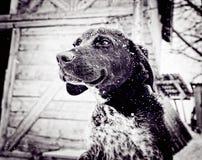 Free Dog Stock Photo - 92913590