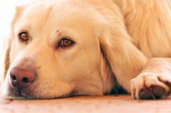 Dog_991 Imagen de archivo libre de regalías