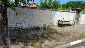 Dog. Abandoned dog in the Street of bulgaria Stock Photo