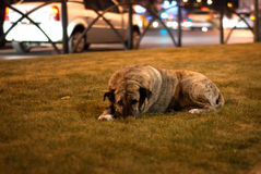 Dog abandonment. Stray dog on the city streets Royalty Free Stock Photos