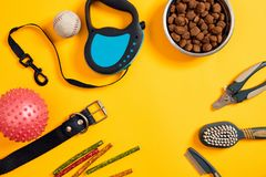 Dog accessories on yellow background. Top view. Pets and animals concept. Still life. Copy space. Flat lay Stock Photography