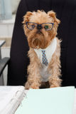 Dog accountant Royalty Free Stock Photos