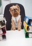 Dog Accountant Royalty Free Stock Photo