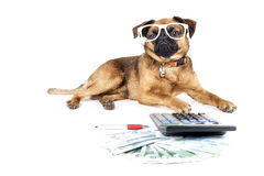 Dog accountant. On a white background Royalty Free Stock Photo