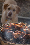 Dog admiring grilled chicken Stock Photo