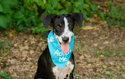 Free Dog Adopt Shelter Animal Rescue Royalty Free Stock Photography - 217332477