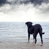 Dog afraid of the water Royalty Free Stock Photo