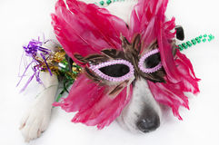 Dog After Party Royalty Free Stock Images