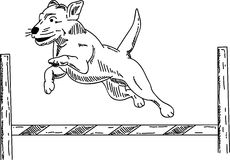 Dog agility Stock Images