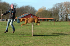 Dog at agility. Beautiful brown dog and happy leader at agility jumping over a hurdle at a large dog place royalty free stock photos