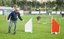 Dog in agility competition jumping over obstacle Stock Photo
