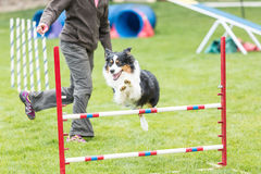 Dog in an agility competition Royalty Free Stock Image