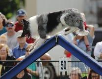 Dog Agility A-Frame Climb Royalty Free Stock Images
