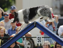Dog Agility A-Frame Climb Royalty Free Stock Images