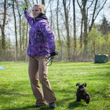 Dog agility on greenfield Royalty Free Stock Photo