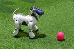Free Dog AIBO Robot With A Ball At The Exhibition Stock Image - 136163371