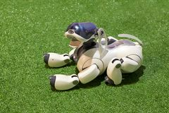 Free Dog AIBO Robot With Toys At The Exhibition Royalty Free Stock Photos - 142310878