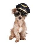 Dog Airplane Pilot Royalty Free Stock Image