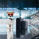 Dog in airport terminal on vacation Royalty Free Stock Photo